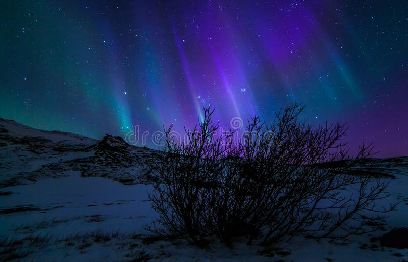 Northern Lights. During winter time in Iceland royalty free stock photo