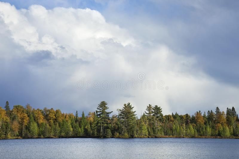 Northern Minnesota lakeshore in autumn color below dramatic clouds. Northern Minnesota lakeshore with pines and aspens in autumn color below dramatic clouds royalty free stock images