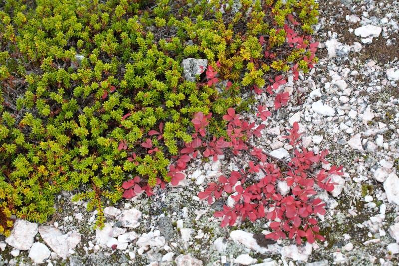Northern vegetation royalty free stock image