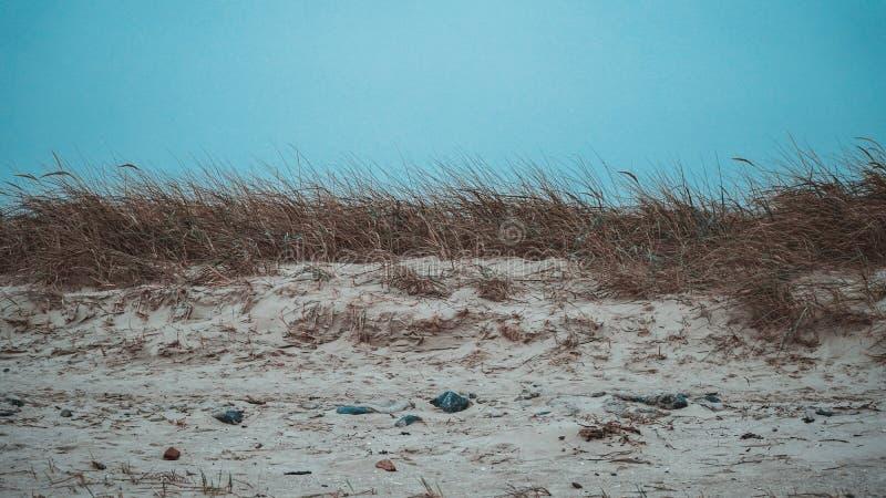 Northsea海岸 免版税库存照片