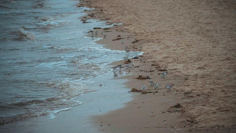 Northsea海岸 库存照片