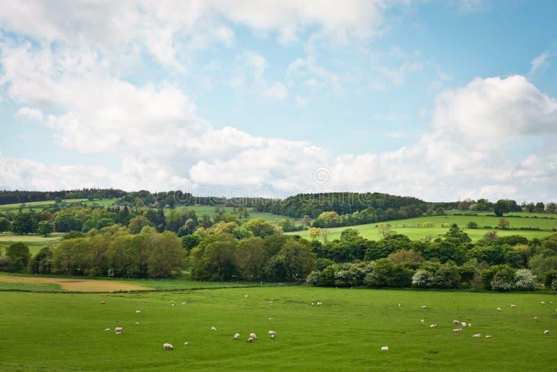 Northumberland stock afbeeldingen