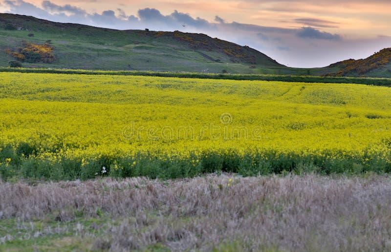 Download Northumberland England stock image. Image of springtime - 31809723