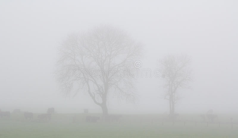 Northumberland mist royaltyfria bilder