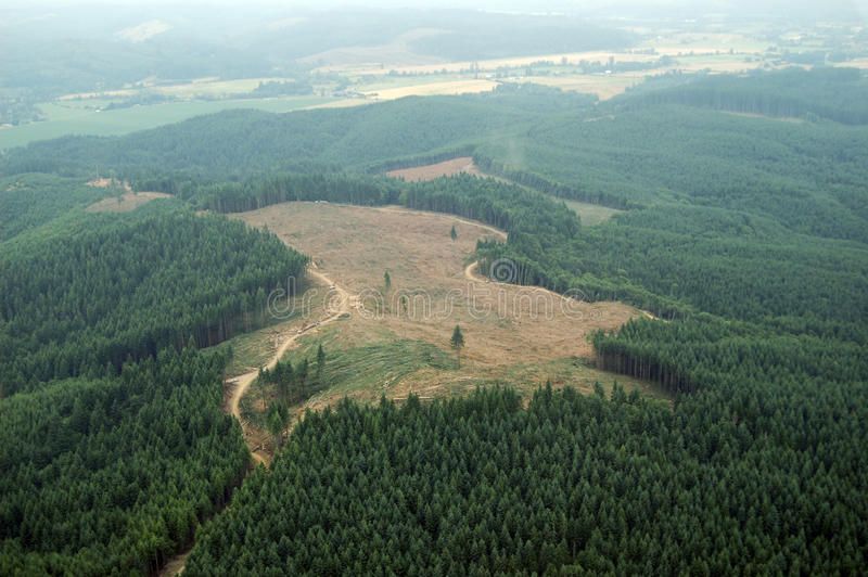 Northwest Clearcut. A patch of clearcut logging in the Douglas Fir forests of western Washington state royalty free stock images