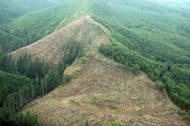 Northwest Clearcut. A patch of clearcut logging in the Douglas Fir forests of western Washington state royalty free stock photo