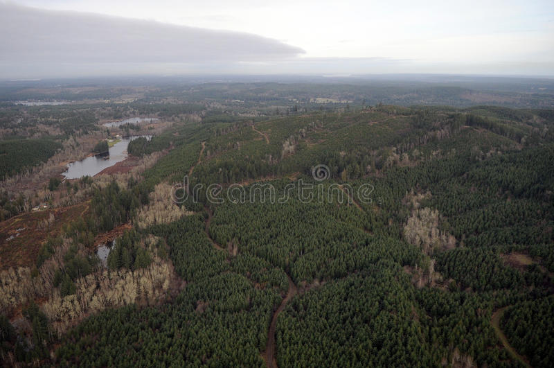 Northwest Clearcut. Patches of logging activity dot the Douglas Fir forests of western Washington state royalty free stock image