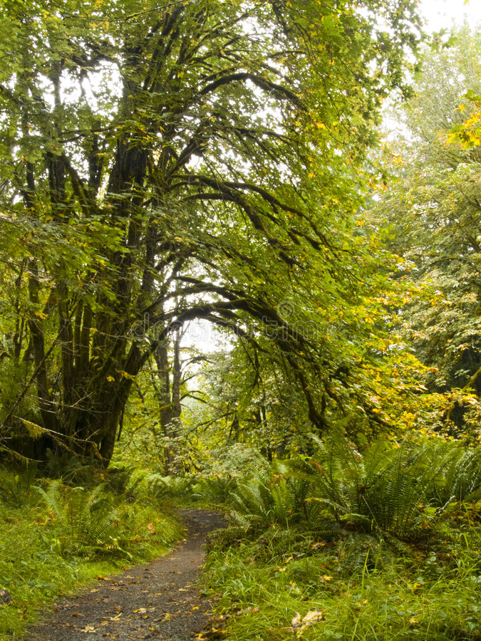Download Northwest Trail stock image. Image of outside, trail, spit - 3651999