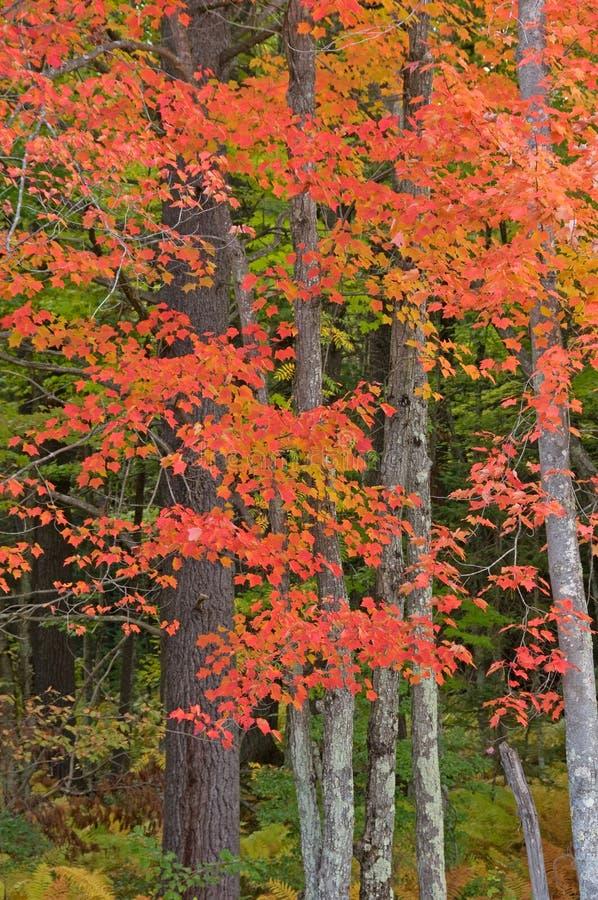 Free Northwoods Autumn Royalty Free Stock Photography - 34630587