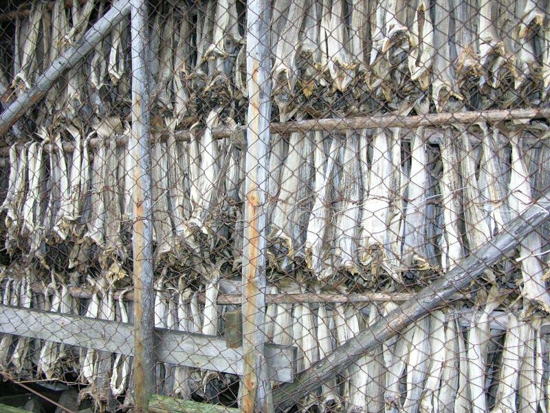 Noruega, pescado secado Lutefisk fotografía de archivo libre de regalías
