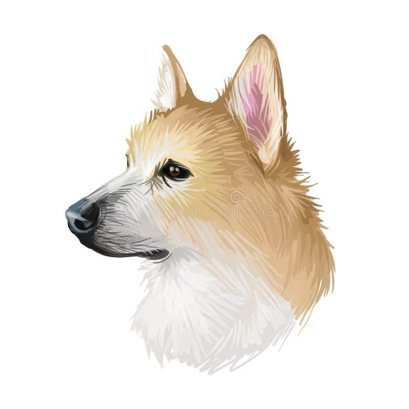 Norueguês, Buhund canine originado da Escandinávia, arte digital Cãozinho isolado do cartaz da Noruega com texto e nome da raça ilustração stock