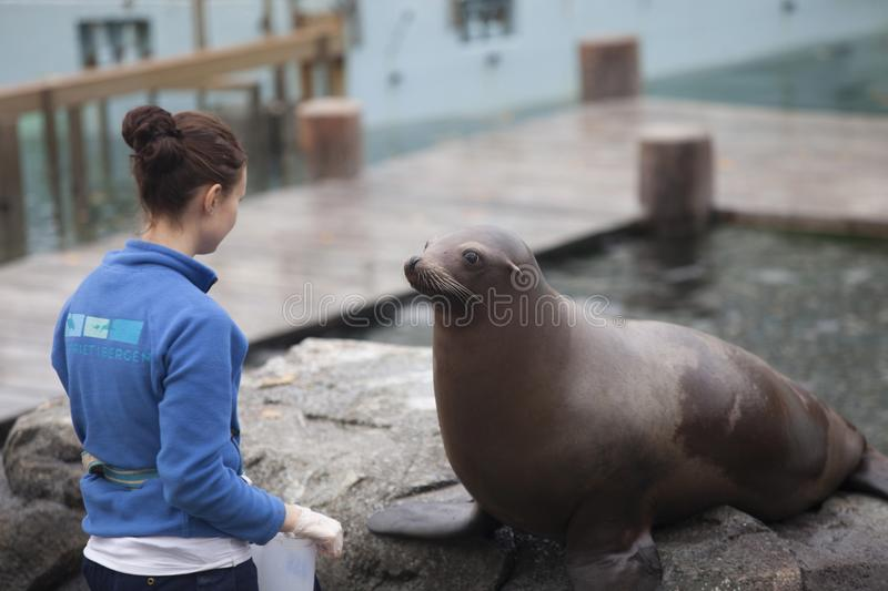 Norway, Bergen. The aquarium and young woman with seal stock photography