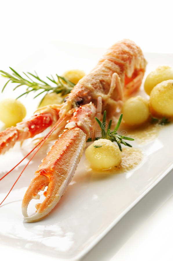 Norway lobster stock image