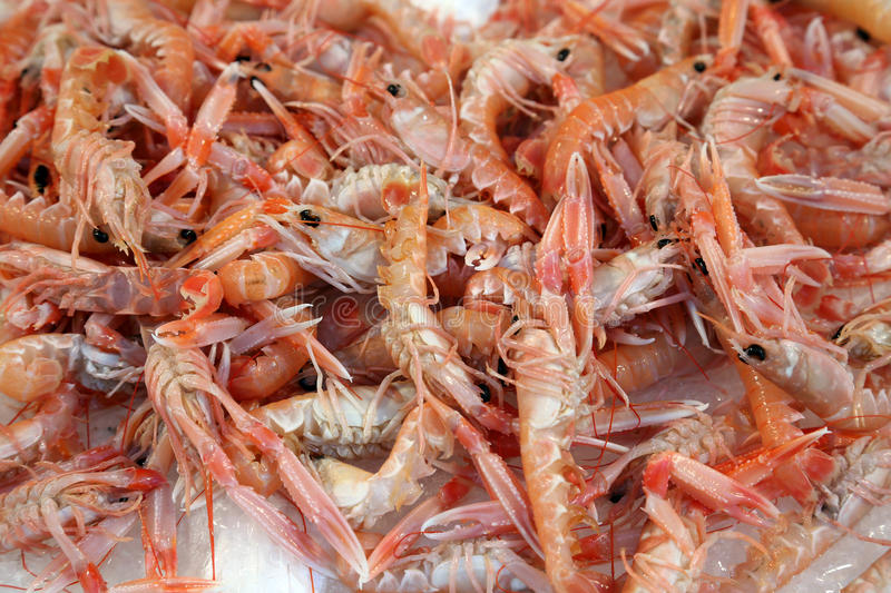 Norway lobsters royalty free stock photo