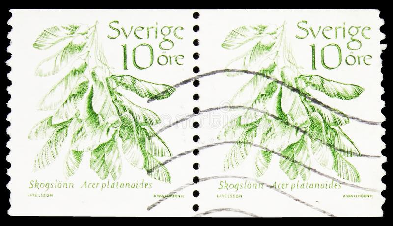 Norway Maple (Acer platanoides), Fruits serie, circa 1983. MOSCOW, RUSSIA - SEPTEMBER 23, 2019: Two postage stamp printed in Sweden shows Norway Maple (Acer royalty free stock image