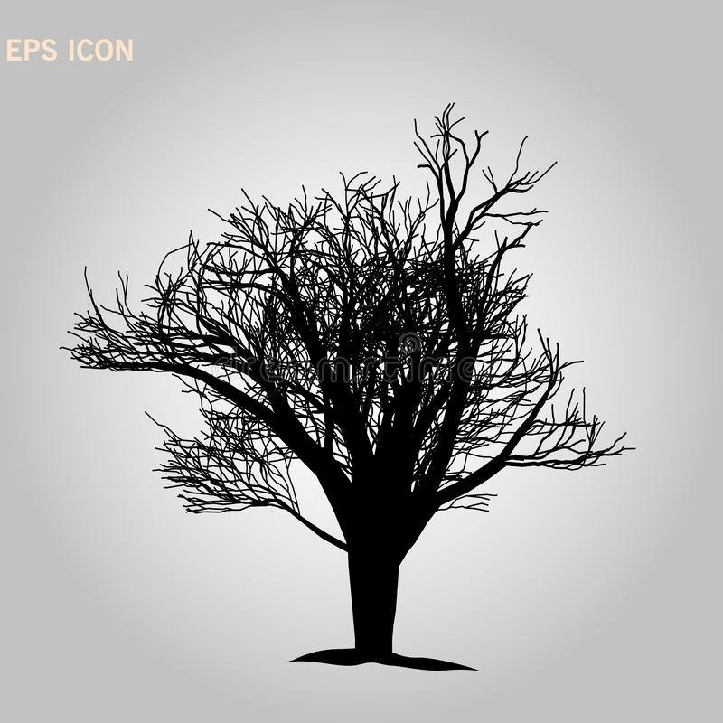 Norway maple architectonics. The structure of the tree branches and trunk. Vector drawing of the tree on a white background eps 10 royalty free stock photo