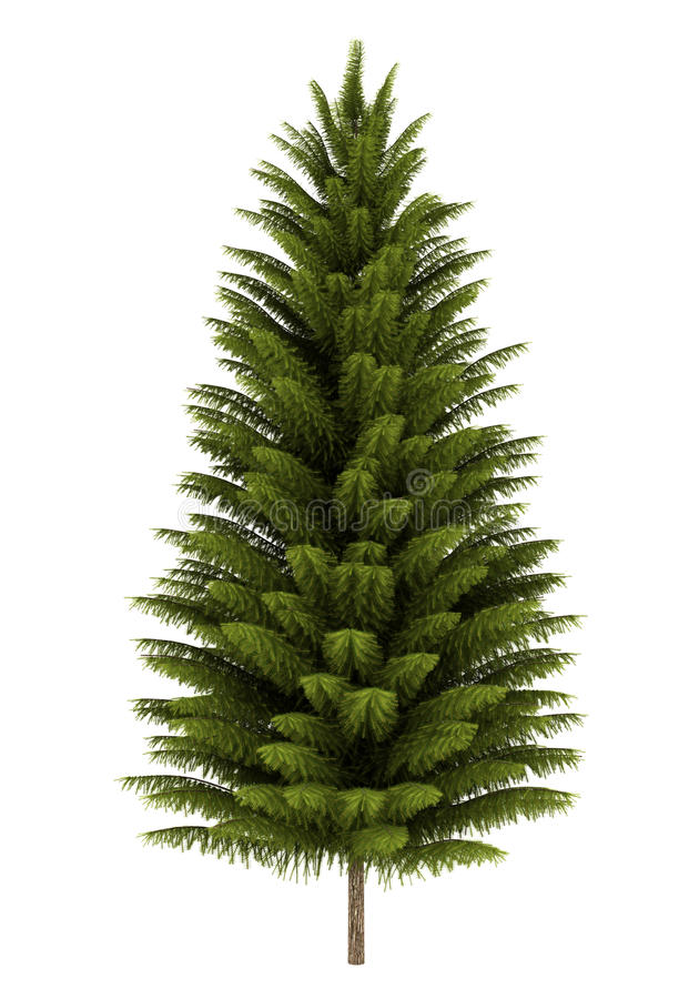 Free Norway Spruce Tree Isolated On White Stock Photo - 22936530