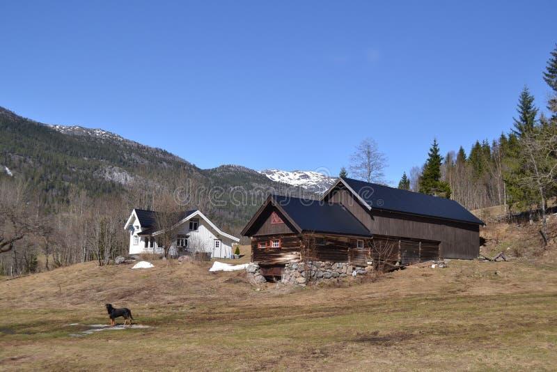 Norwegerbauernhof im Frühjahr lizenzfreies stockfoto