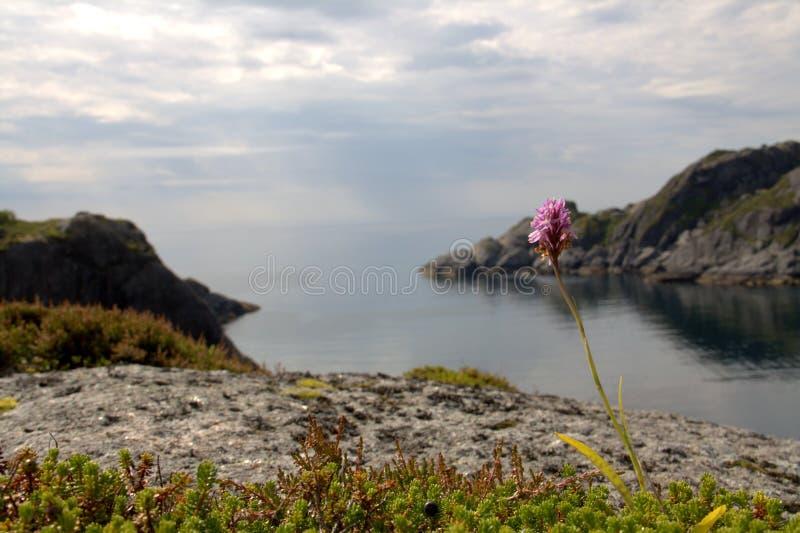 Download Norwegian fjord stock photo. Image of norwegian, petals - 20325782