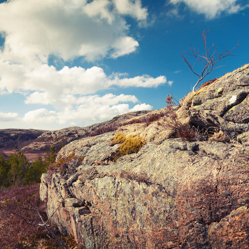 Norwegian spring landscape with small bare tree royalty free stock image