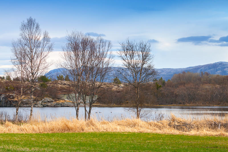 Norwegian spring landscape. With trees and green grass royalty free stock photo