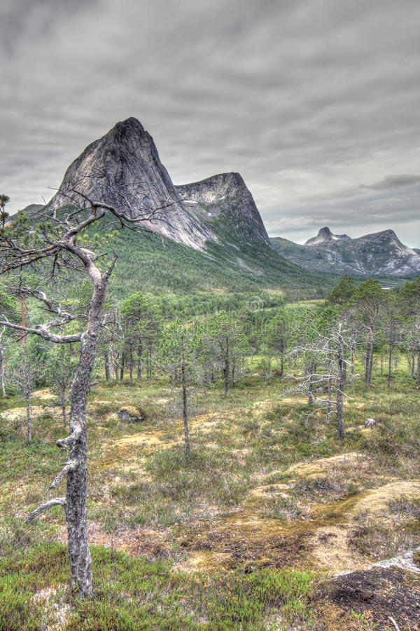 Norwegian tundra and mountains stock images