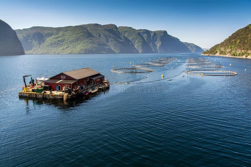 Norweski rybi gospodarstwo rolne fotografia stock