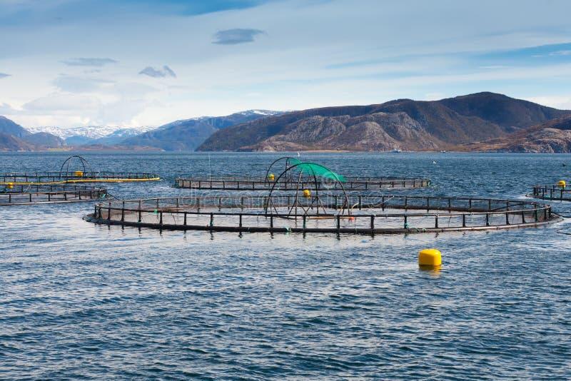 Norweski rybi gospodarstwo rolne dla łososiowego dorośnięcia obraz royalty free
