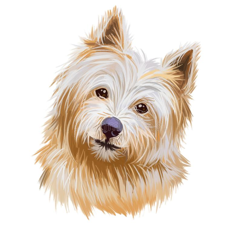 Norwich terrier pet with long fur and kind muzzle digital art. Canis lupus familiaris, pet of United Kingdom origin, watercolor. Norwich terrier pet with long stock illustration