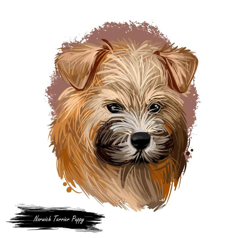 Norwich terrier puppy breed from United Kingdom digital art. Canine watercolor portrait muzzle closeup, pet hunting rodents and vermins. British canine, doggy stock photography