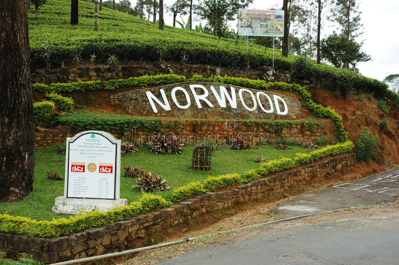 Norwood tea plantations,Sri Lanka royalty free stock photos
