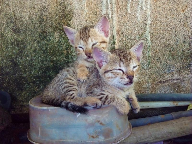 Nos chats affectueux à la maison 2 photos libres de droits