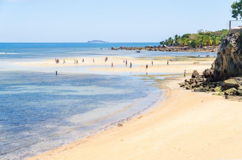 Nosaty Komba Madagascar fotografia royalty free