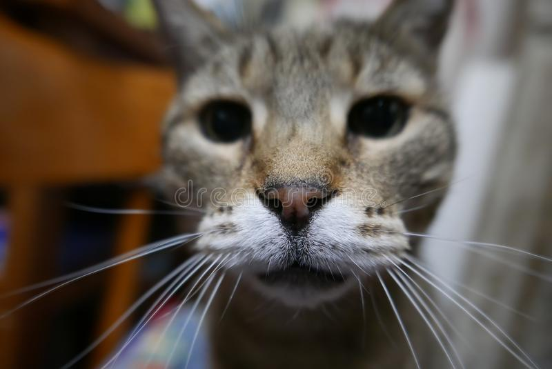 Nose cat selective focus. Selective focus on cat nose, feline pet concept stock photos