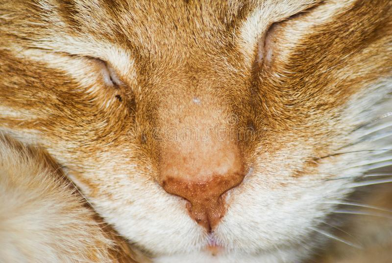 A nose of a sleeping cat. A close look at a nose of a sleeping cat royalty free stock photos