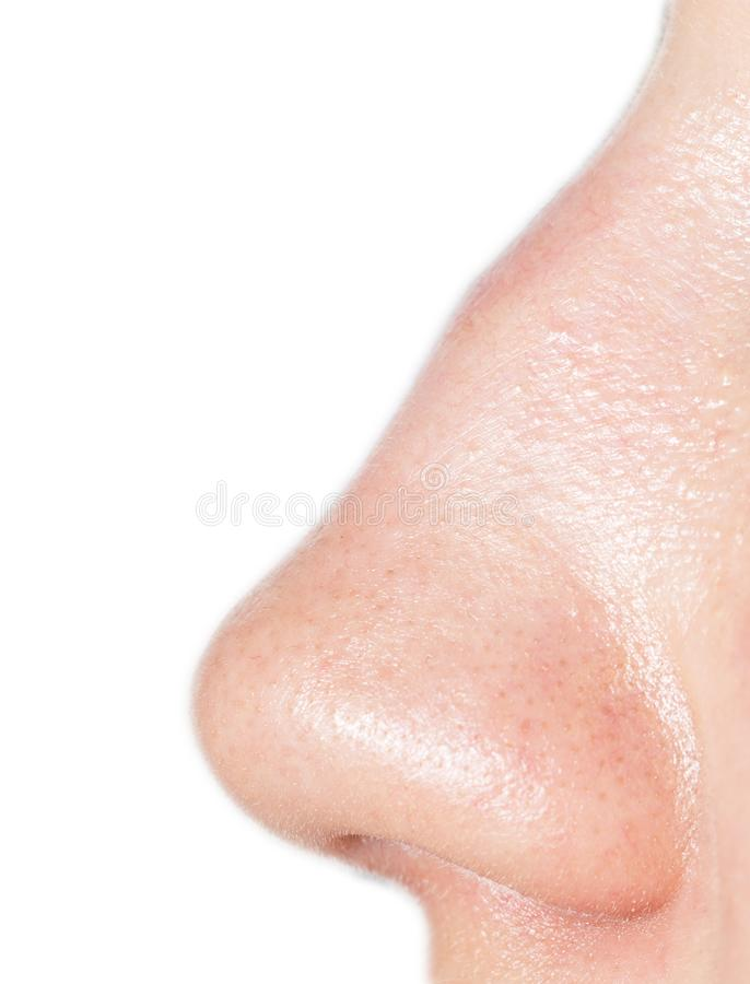 Nose on a white background stock photography