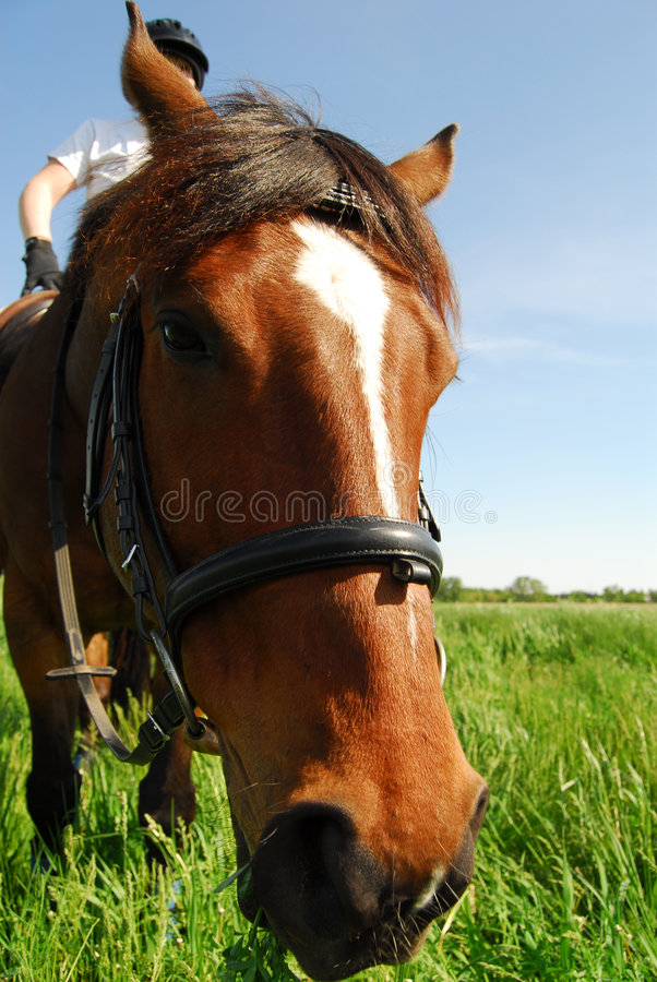 Nosey horse stock image