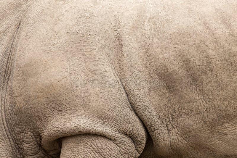 Noshörninghud som bakgrund royaltyfri fotografi