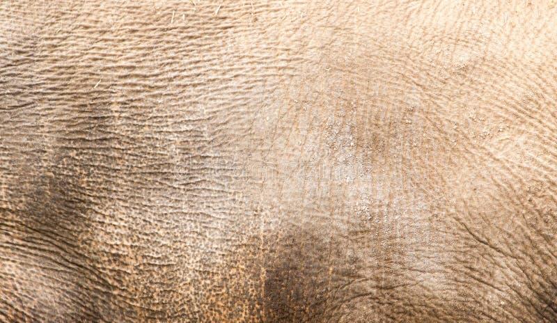 Noshörninghud som bakgrund fotografering för bildbyråer