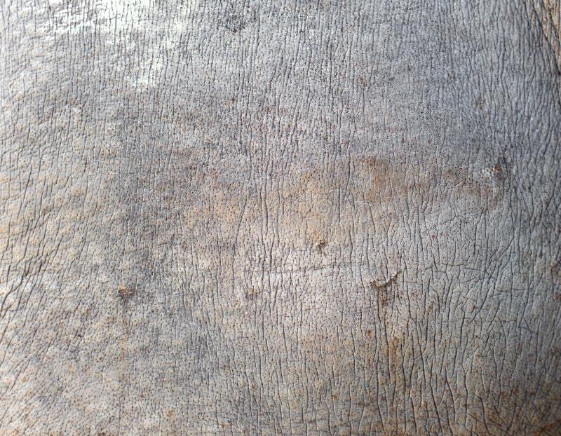Noshörninghudtextur royaltyfria foton