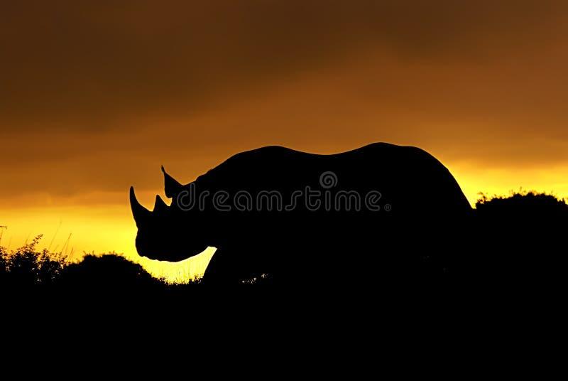 nosorożec sylwetki słońca obrazy stock