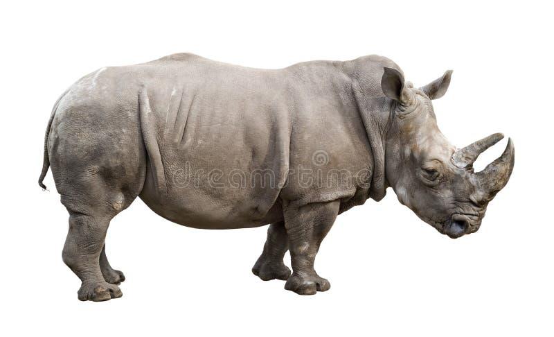 nosorożec wycinanki męski stary white zdjęcie stock