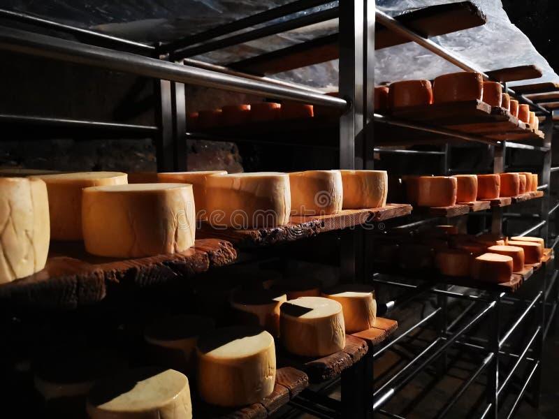 Nosowy ser na metalu odkłada w grocie zdjęcie royalty free