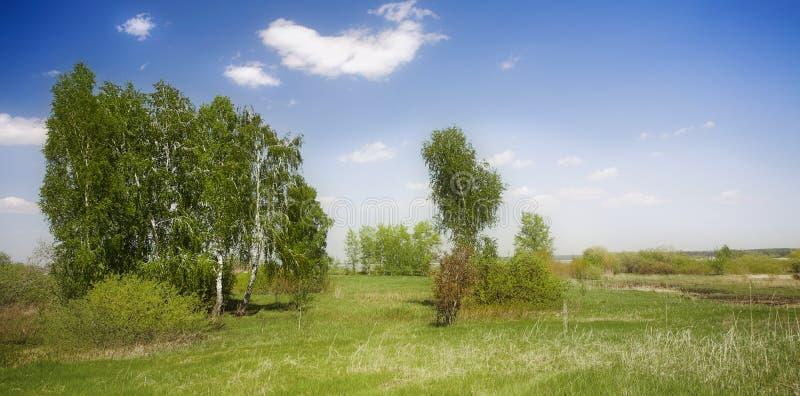 Download Nostalgia stock photo. Image of birch, open, mood, blue - 7583264