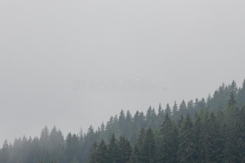 Nostalgic view of evergreen coniferous forest with low clouds and fog. royalty free stock photo