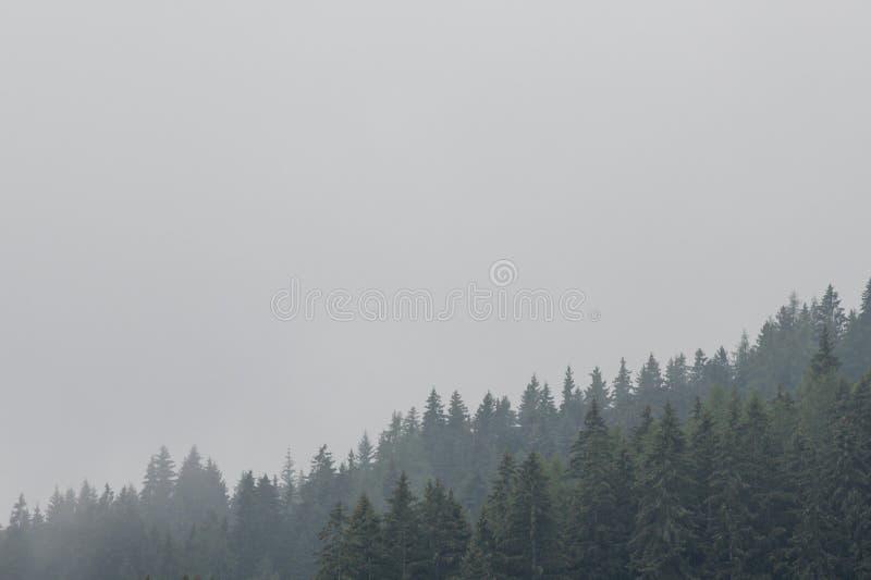 Nostalgische Ansicht des immergrünen Koniferenwaldes mit tiefen Wolken und Nebel lizenzfreies stockfoto