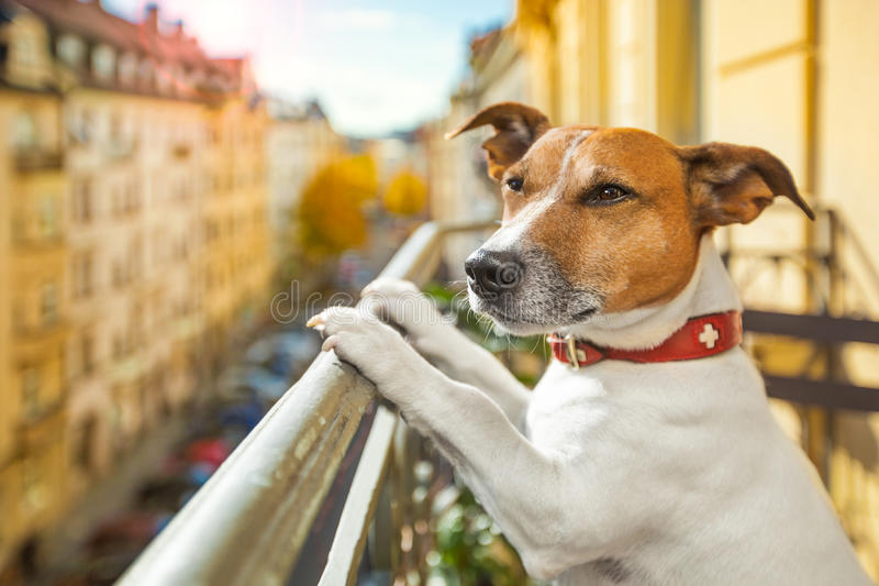 Nosy watching dog stock image