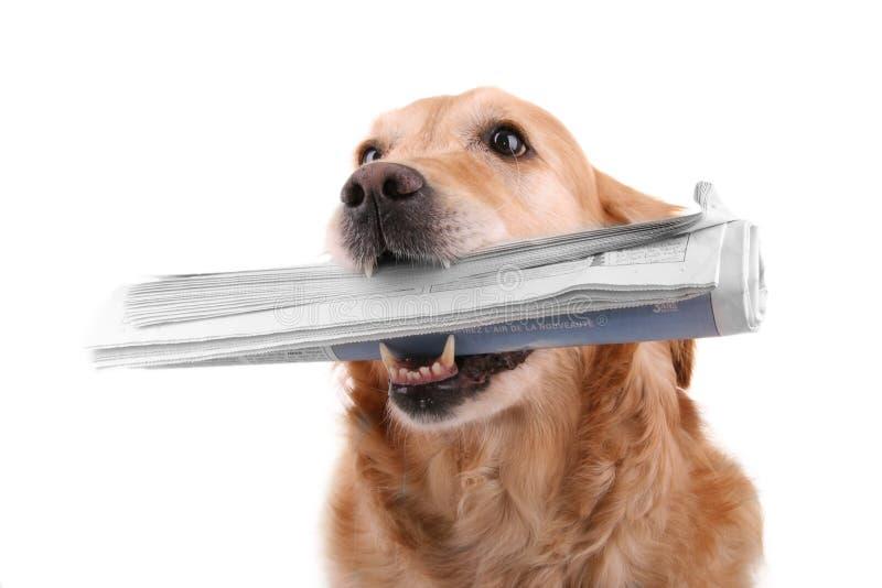 Notícia do cão imagem de stock royalty free