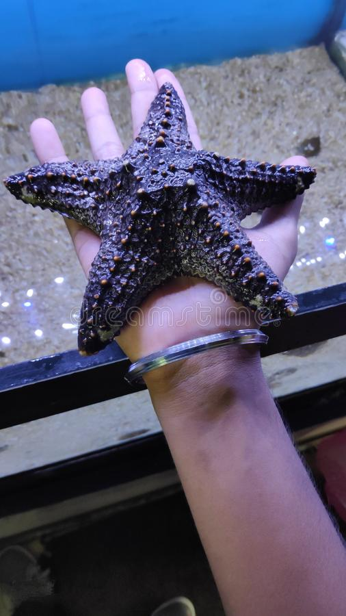 Not all Stars belong to the Sky stock photo