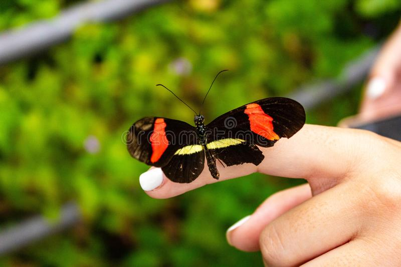 Colorful Butterfly Resting om Human Finger royalty free stock photo